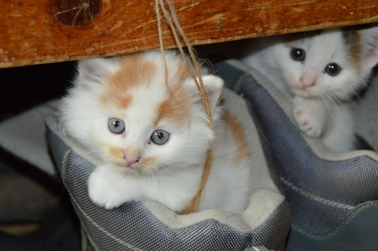 national cat day - pet proofing kittens in bed string
