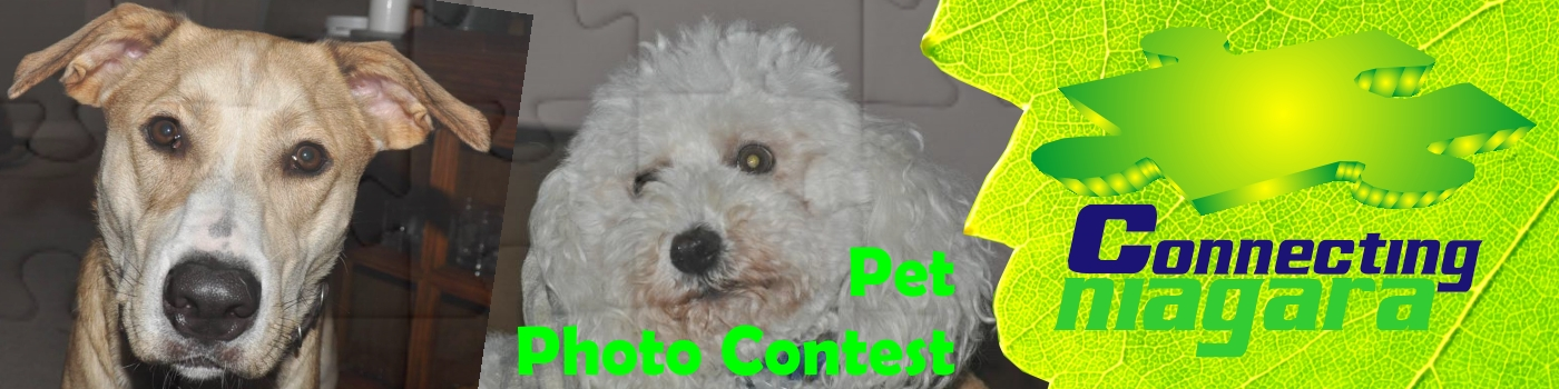 Show the love of your pet photo contest.